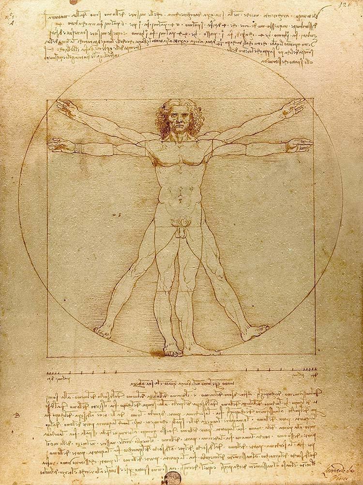 Obraz Człowiek witruwiański Leonardo da Vinci - reprodukcja obrazu na płótnie fototapeta, plakat