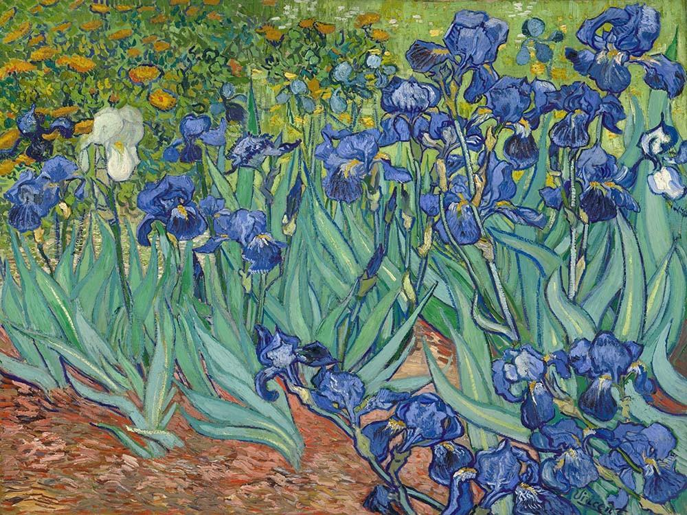 Obraz Irysy Vincent van Gogh - reprodukcja obrazu na płótnie fototapeta, plakat